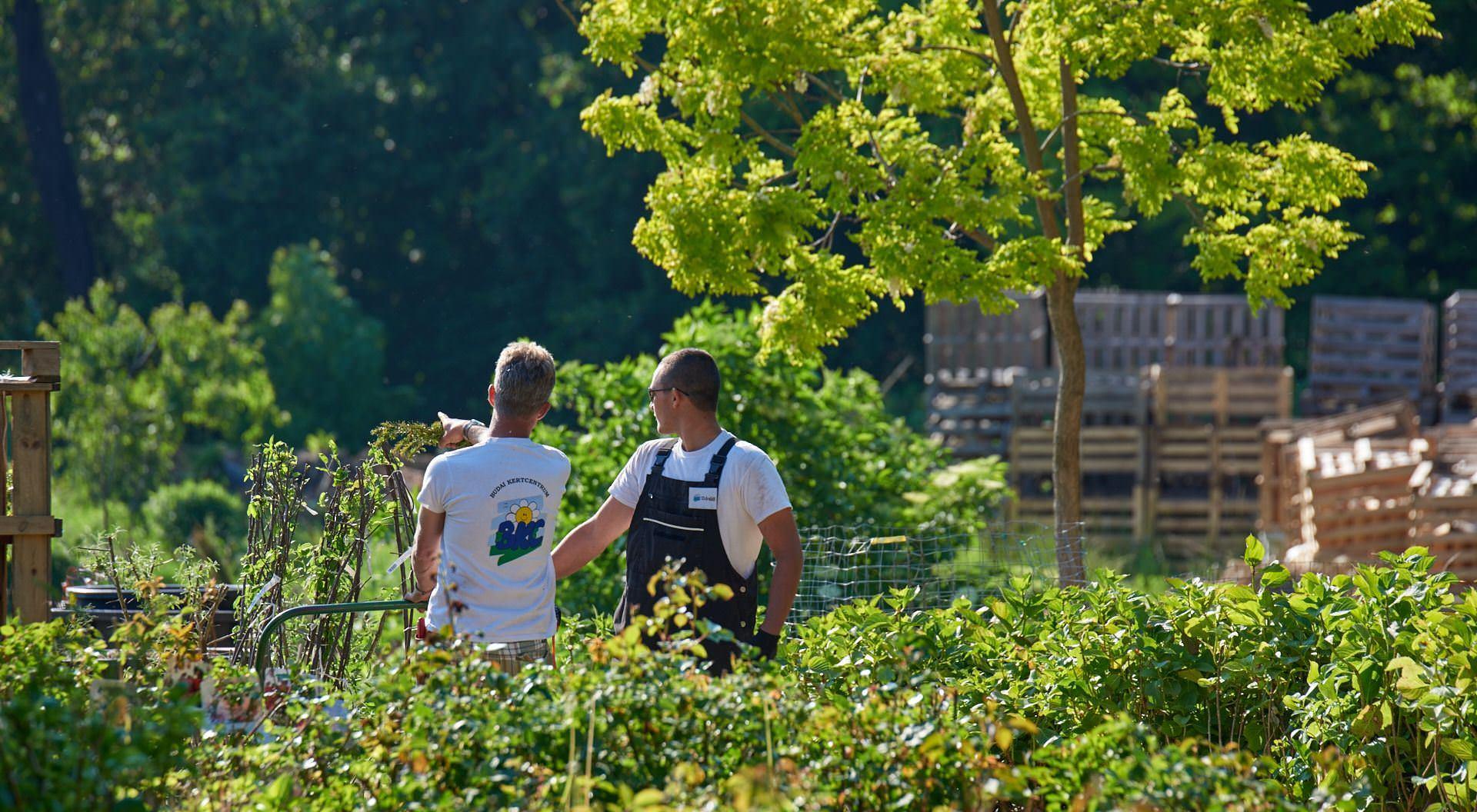 Dolgozz velünk - Kertészetvezetőt keresünk - Kertészet Budapest