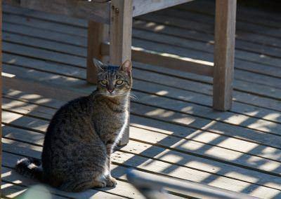 Budai Kertcentrum macska