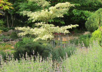 Távolról is szép kert - BKC