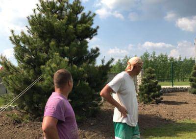 Budai Kertcentrum kertépítés Pinus nigra, Feketefenyő - elkészült 2