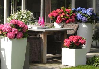 hortenzia mánia terasz