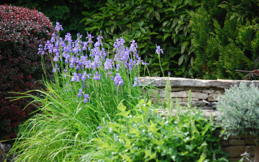 Szakcikk 1.: Az első lépés: tervezzünk kertet!