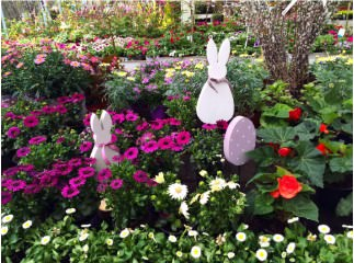 Kertészetünk életéről - Blogok