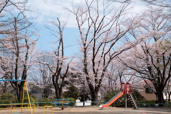 japán cseresznyevirágzás