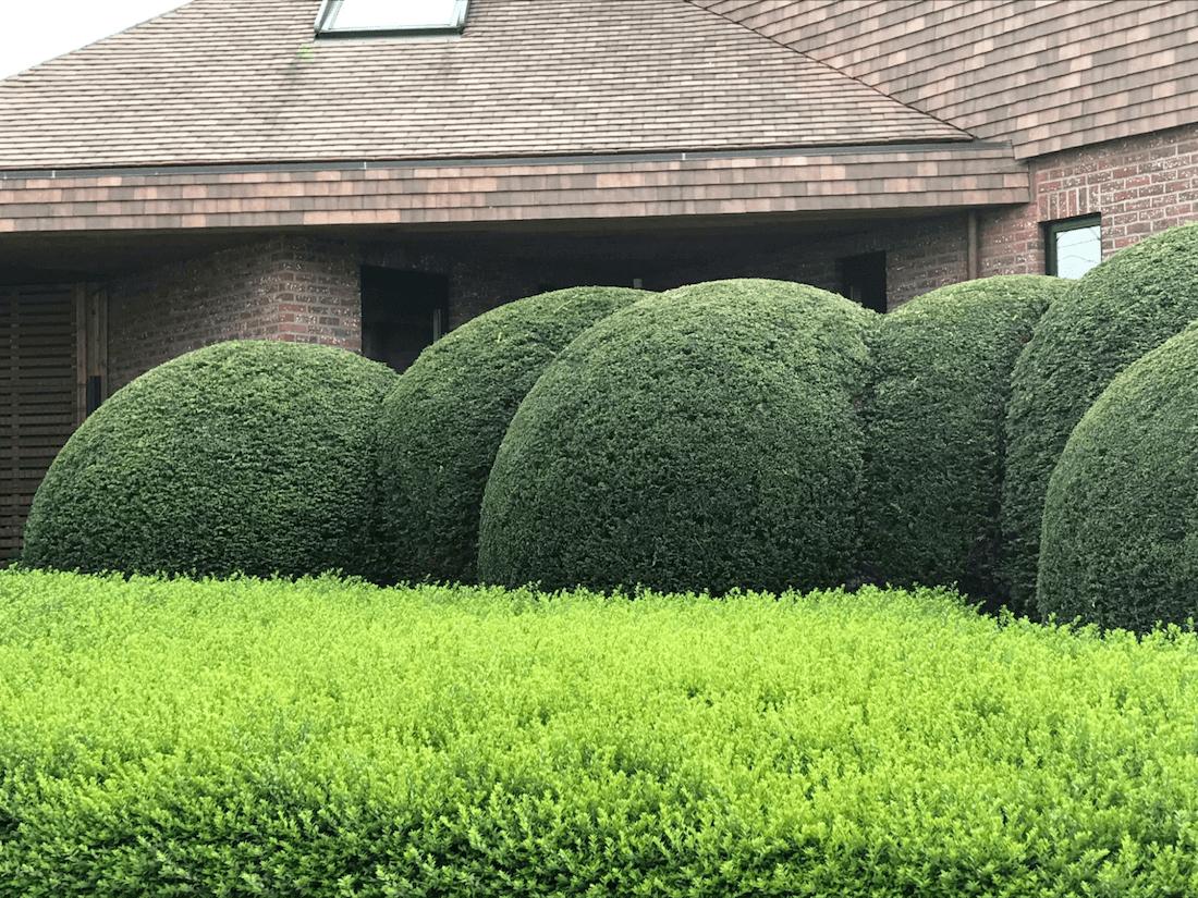 tiszafa ültetése, gondozása