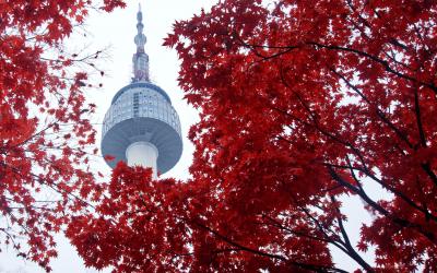 Japán juhar (Acer palmatum): Ültetése, gondozása, metszése